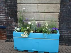 "An image of one of the newly installed large planters at the station ""Ice"" containing blue and white coloured flowers and plants."